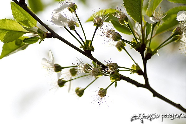 Aprile - La Primavera-image0604120057-large-.jpg