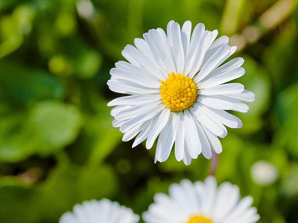 Aprile - La Primavera-2012-03-25_16-16-48__dsc0614.jpg