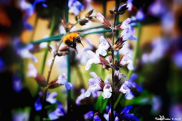 Aprile - La Primavera-dsc_3811-hdtv-1080-.jpg