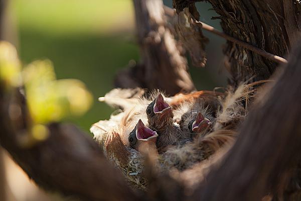 Aprile - La Primavera-useleti.jpg