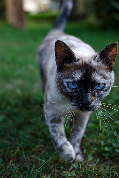 Settembre - Il Ritratto-gatto.jpg