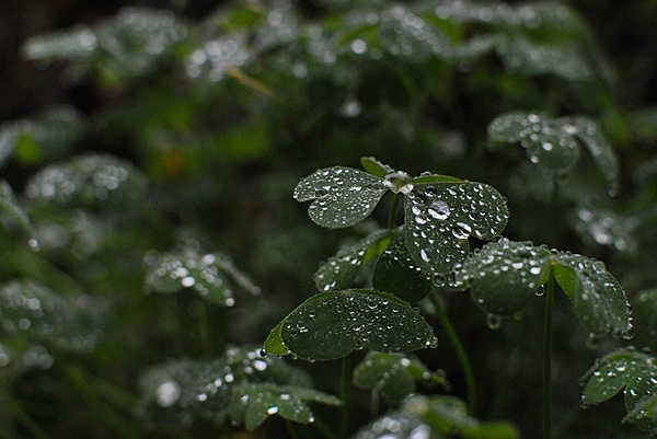Ottobre - La Pioggia-gocce_01.jpg