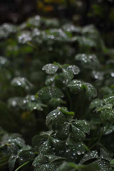 Ottobre - La Pioggia-gocce_02.jpg