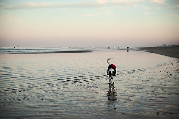 Winter Sea-img_6500.jpg