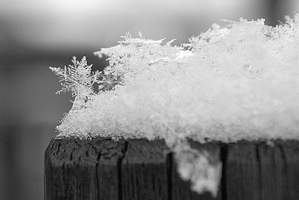Varie macro di cristalli di neve-_dsc0311.jpg