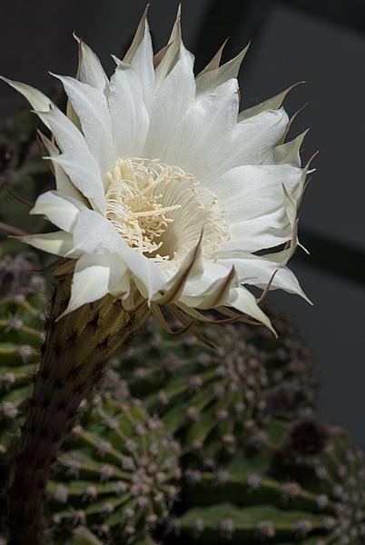 Flowers-cactus-resized.jpg