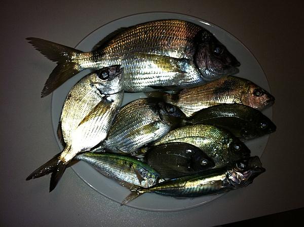 [Album] Catture di pesca-img_0289.jpg