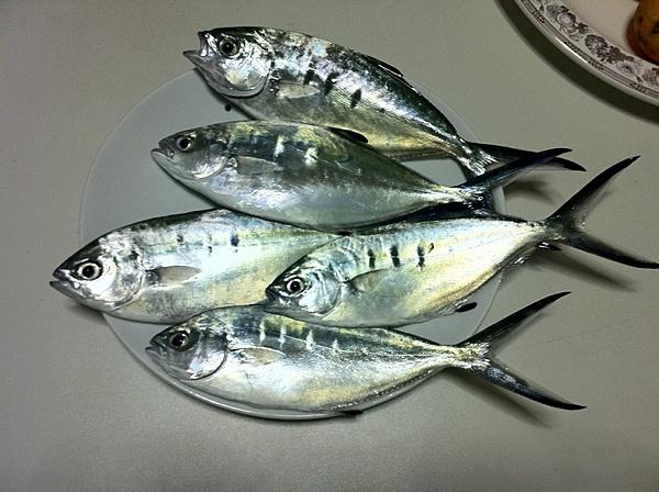 [Album] Catture di pesca-img_0396.jpg