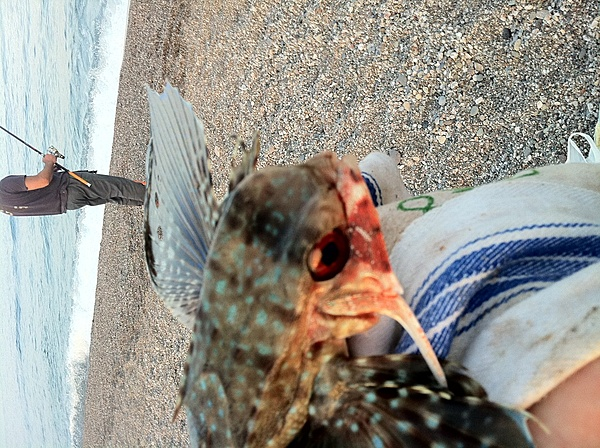 [Album] Catture di pesca-img_0399.jpg