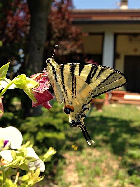 Per colui che si vanta di essere l'esperto di farfalle...-photo.jpg
