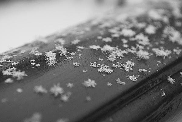 TechArena Photo Contest: Il freddo-10929d1329558317-febbraio-il-freddo-_dsc0318.jpg