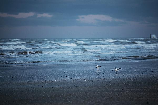 TechArena Photo Contest: Il freddo-11780d1330549670-febbraio-il-freddo-winter_sea.jpg