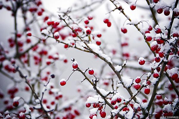 TechArena Photo Contest: Il freddo-11781d1330557775-febbraio-il-freddo-crw_0580.jpg