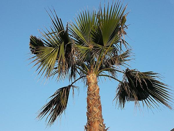 L'equilibrio di una piuma. Merita un topic suo-p_foglie.di.palma.cielo.jpg