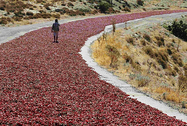 Clicca sull'immagine per ingrandirla  Nome:   hot peppers laid out on a road to dry under the sun.jpg Visite: 352 Dimensione:   633.2 KB ID: 31865