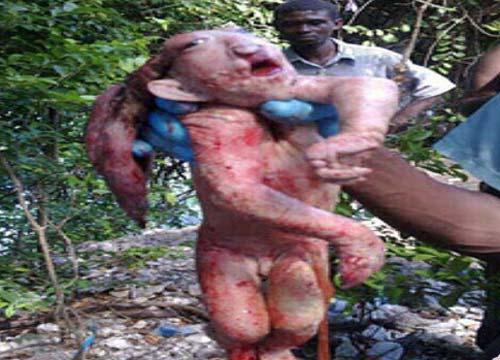 Il maialino alieno-animale-umano.jpg