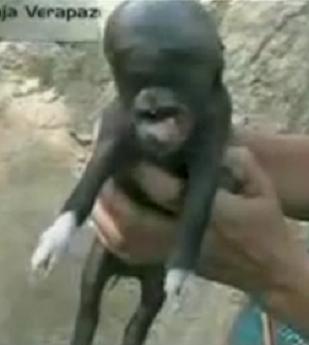 Il maialino alieno-pig-alien.png